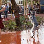 Stadtteilfest sankt pieschen 2017 059